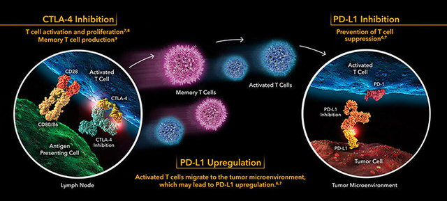 PD-L1 inhibition therapy